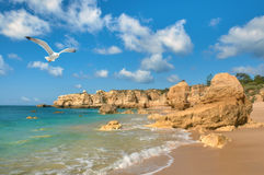 Gaviota que vuela sobre la playa de oro cerca de Albufeira, Portugal Fotos de archivo