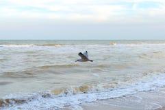 Gaviota sobre el mar Un ave marina libre asoma fotografía de archivo libre de regalías