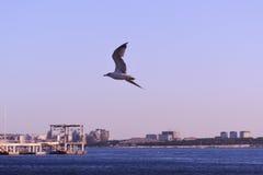 Gaviota sobre la bahía de Gelendzhik Imagenes de archivo