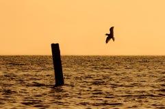 Gaviota sola que vuela sobre el lago en la puesta del sol de la tarde foto de archivo libre de regalías