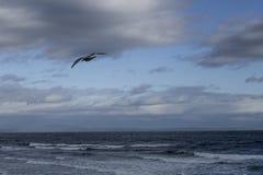 Gaviota solitaria Foto de archivo libre de regalías