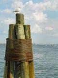 Gaviota solitaria en la viruta de madera del embarcadero en costa del océano en Massachusetts Imágenes de archivo libres de regalías
