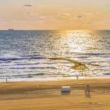 Gaviota Virginia Beach, Virginia los E.E.U.U. de Virginia Beach Sunrise imagen de archivo libre de regalías