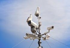 Gaviota y cámaras de vigilancia Foto de archivo libre de regalías