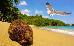 Gaviota y coco en la playa imagen de archivo