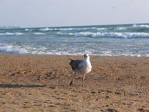 Gaviota y el mar Fotos de archivo