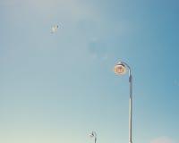 Gaviota y lámpara foto de archivo