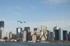 Gaviota y Manhattan del sur Fotografía de archivo libre de regalías