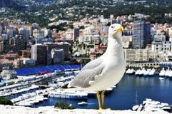 Gaviota y puerto Hércules en el La Condamine y Monte Carlo, en el MES Fotos de archivo libres de regalías
