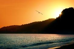 Gaviota y puesta del sol fotos de archivo libres de regalías