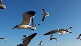Gaviotas Photographie stock