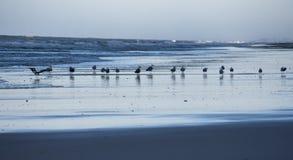 Seagulls at dawn Royalty Free Stock Photography