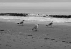 Gaviotas al lado del océano Fotos de archivo libres de regalías