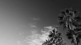 Gaviotas, cielo azul y palmas metrajes