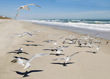 Gaviotas con escena del océano Foto de archivo
