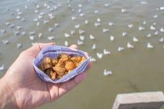 Gaviotas de alimentación de la gente a mano y el agrietarse frito Fotografía de archivo libre de regalías