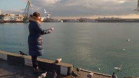 Gaviotas de alimentación de la mujer en la costa almacen de video