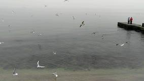Gaviotas de alimentación del vuelo de la gente en la costa del Mar Negro metrajes