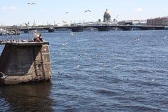 Gaviotas de alimentaci?n en el r?o de Neva en el fondo del puente imágenes de archivo libres de regalías