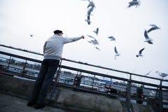 Gaviotas de alimentación en Hamburgo, Alemania imagen de archivo