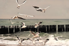 Gaviotas de arenques Imagen de archivo libre de regalías