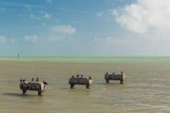 Gaviotas de la playa Imagenes de archivo