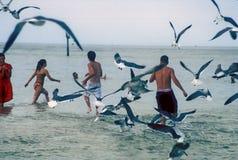 Gaviotas de mar del vuelo y bañistas Foto de archivo libre de regalías