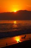Gaviotas de mar en la puesta del sol Imagenes de archivo
