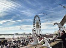 Gaviotas del embarcadero de Brighton Foto de archivo libre de regalías