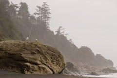 Gaviotas del océano Foto de archivo libre de regalías
