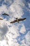 Gaviotas del vuelo en el verano del cielo en la Crimea Imágenes de archivo libres de regalías