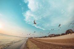 Gaviotas del vuelo en la playa fotografía de archivo libre de regalías