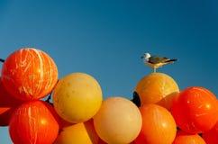 Gaviotas en boyas anaranjadas fotografía de archivo
