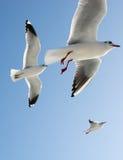 Gaviotas en cielo Fotografía de archivo
