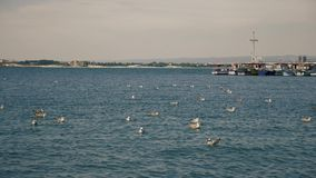 Gaviotas en el agua cerca del puerto metrajes