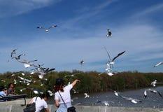 Gaviotas en el cielo Foto de archivo libre de regalías