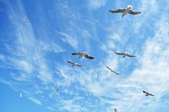 Gaviotas en el cielo Fotografía de archivo libre de regalías
