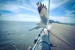 Gaviotas en el cielo azul Fotografía de archivo