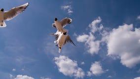 Gaviotas en el cielo azul soleado
