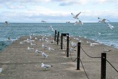 Gaviotas en el embarcadero, el lago Michigan imagen de archivo libre de regalías