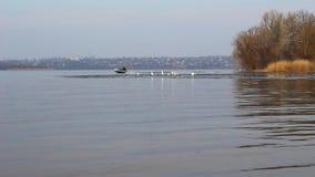 Gaviotas en el hielo y un pescador en un barco almacen de metraje de vídeo