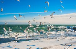 Gaviotas en el mar del invierno Imagen de archivo libre de regalías