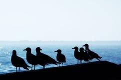 Gaviotas en el puerto Imagen de archivo