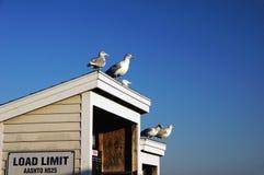 Gaviotas en el tejado Fotografía de archivo