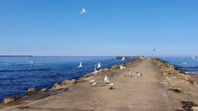 Gaviotas en el topo del mar Báltico Riga, Latvia almacen de video