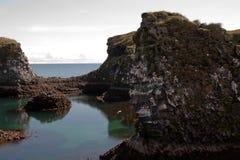 Gaviotas en Islandia Imagen de archivo libre de regalías