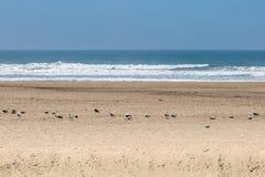 Gaviotas en la arena, en la playa del océano, San Francisco Imágenes de archivo libres de regalías