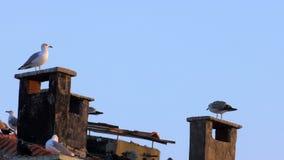 Gaviotas en la chimenea