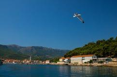 Gaviotas en la ciudad de Hvar Konzum de la isla, mar adriático, Croacia foto de archivo