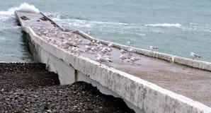 Gaviotas en la costa Imagen de archivo libre de regalías